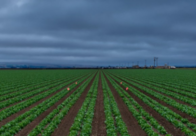 SPD lehnt geplante Reform der EU-Agrarpolitik ab