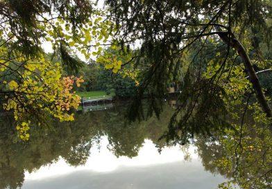 Der Argenthaler Waldsee