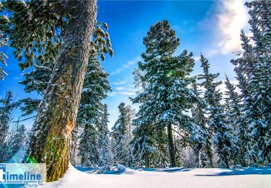 Schneebruchgefahr im Binger Wald